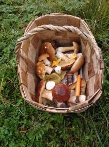Korillinen elämänlaatua - A basketful of quality of life :)